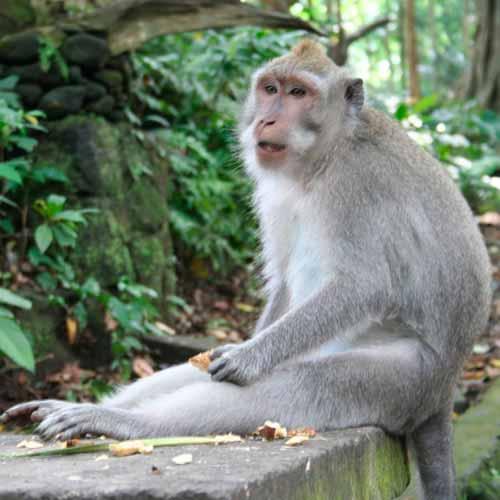 Santuário Floresta dos macacos