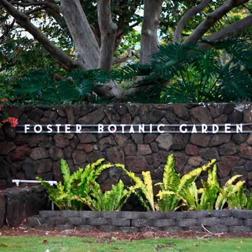 Jardim Botânico Foster