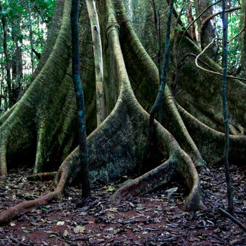 Parque Estadual da Mata dos Godoy