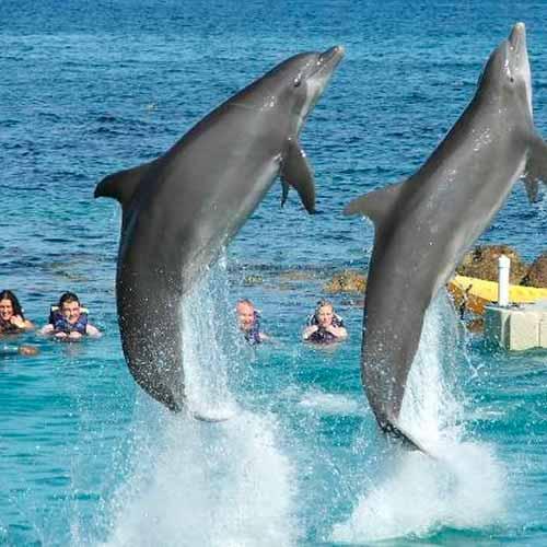 Nado com golfinhos + cachoeira rio Dunns