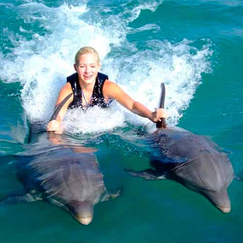 Nado com golfinho