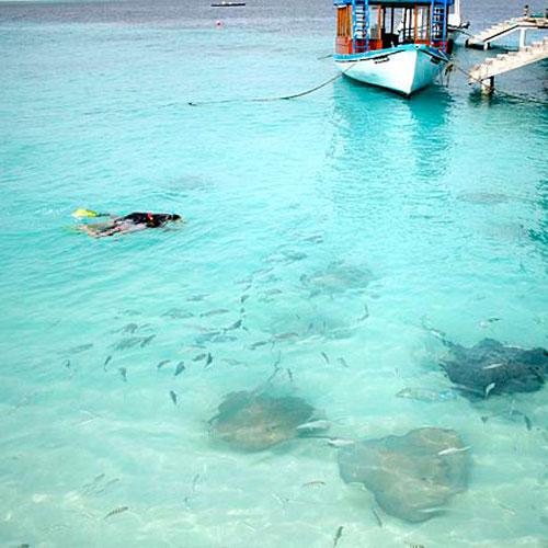Nadar com Arraias Manta