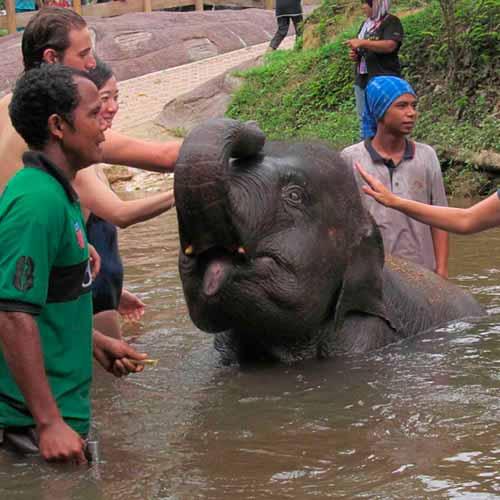 Tour Santuário dos elefantes