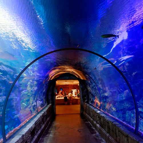 Aquário Shark Reef