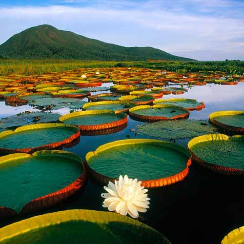 Passeio 1 dia no Pantanal