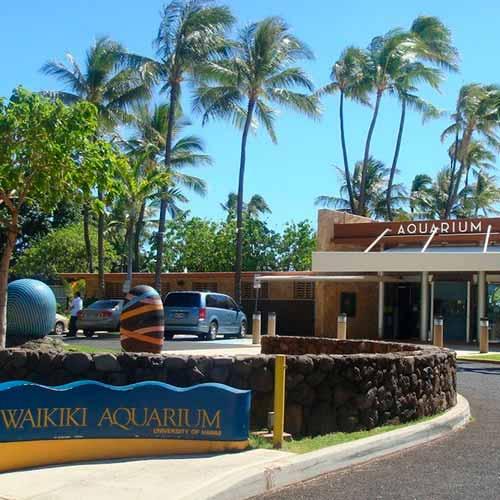 Aquário Waikiki