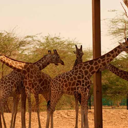 Zoológico Al Ain