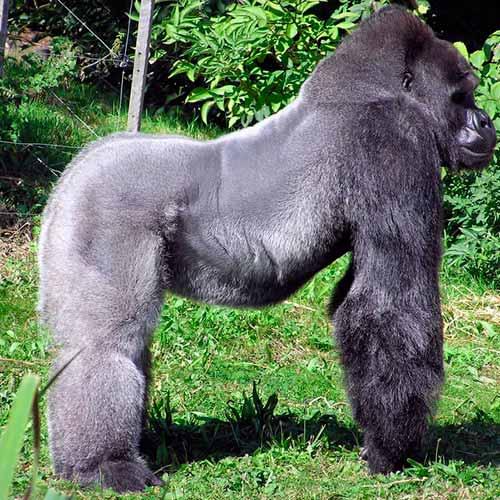Jardim Zoológico de Bristol