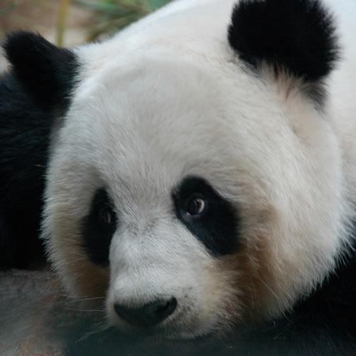 Chiang Mai Zoológico
